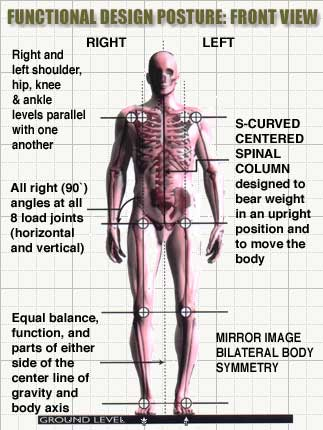 Blue print of functional posture the pain free clinic pain free pay attention to your postural balance and watch how things begin to change for the better we are here to help and would love to hear from you malvernweather Choice Image