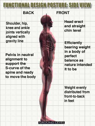 Blue print of functional posture the pain free clinic pain free now we know what our postural alignment should looks like it is time to see how you compare is your weight really evenly distributed malvernweather Choice Image